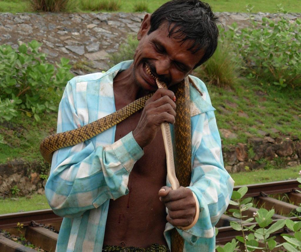 Man eats live snakes