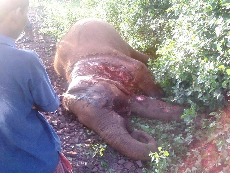 Train hits elephant herd, two killed