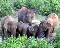 Elephants in Danger in Keonjhar