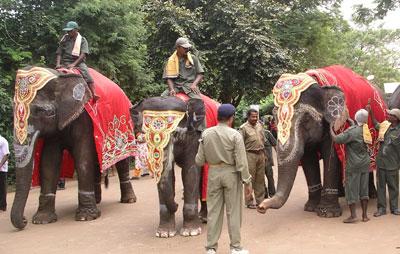 Nandankanan observes wildlife week, elephant Day
