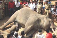 Death of Abhimanyu the Tusker near Khurda