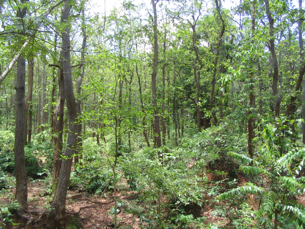 MoEFCC Raises Concerns Over Orissa Diverting Forest Land To Non-Forest Usage